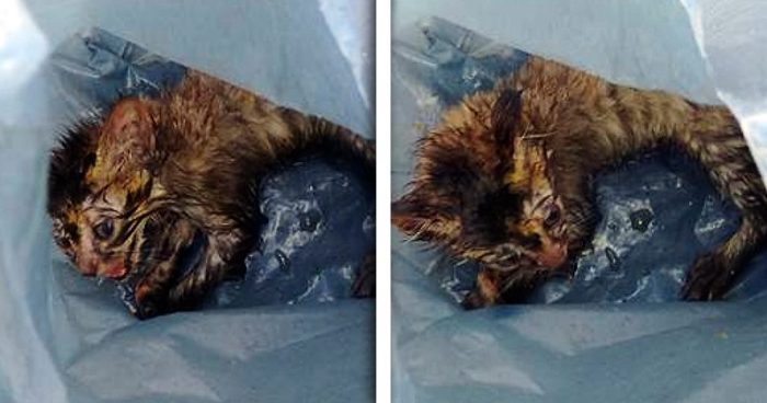 A Teacher Found This Kitten Crying In A Bag…This Story Will Break Your Heart