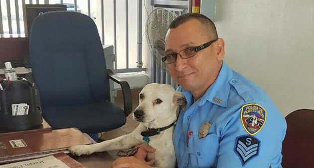 You Won't Believe How This Stray Dog Got A Job With The Police!