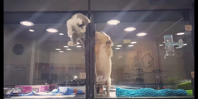 Kitten Escapes Pet Store Display To Play Its Lonely Dog Friend
