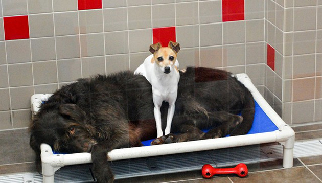Dogs Who Lost Their Home Can't Stop Cuddling In The Shelter