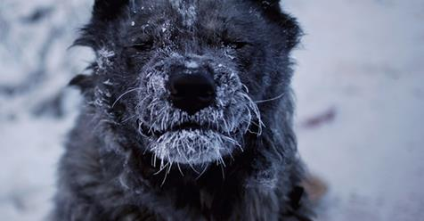 Fascinating Photos of Yakutsk and Oymyakon, the Coldest Village in the World