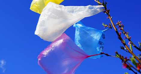 California Becomes First State to Officially Ban Plastic Bags