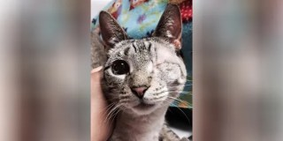 Cat with one eye which was considered to be ugly finally meets its soul mate