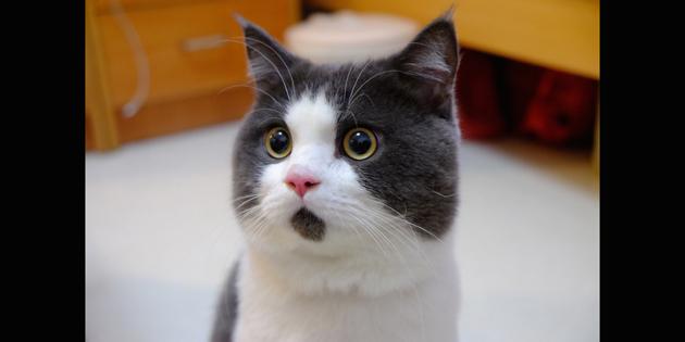 Meet The OMG Cat, The Feline Who Is Always Surprised