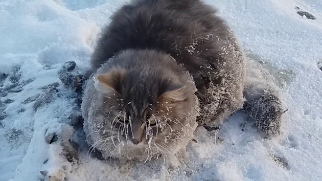 This Frozen Kitty Gets a Second Chance Thanks to These Rescuers