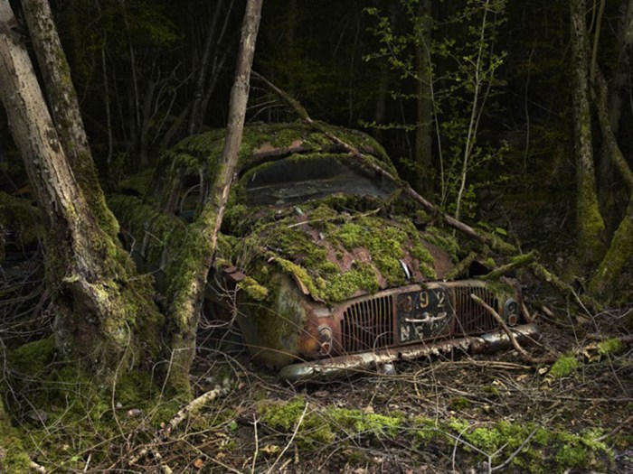 Hauntingly Beautiful Photos of Deserted Cars Enveloped by Nature