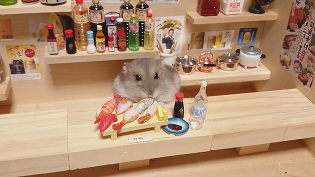 Adorable Hamster Bartenders Serving Tiny Food and Drinks