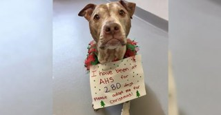 Senior dog finally finds a new home after spending almost 300 days in shelter