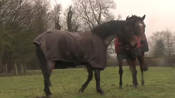 Depressed Horses Are Being Reunited After 4 Years Apart