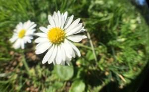 mindfulness emotions flower