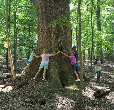 Forest bathing benefits for children spending time playing in the forest