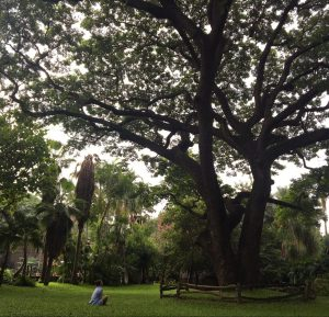 Experience forest bathing benefits by sitting quietly under a large tree