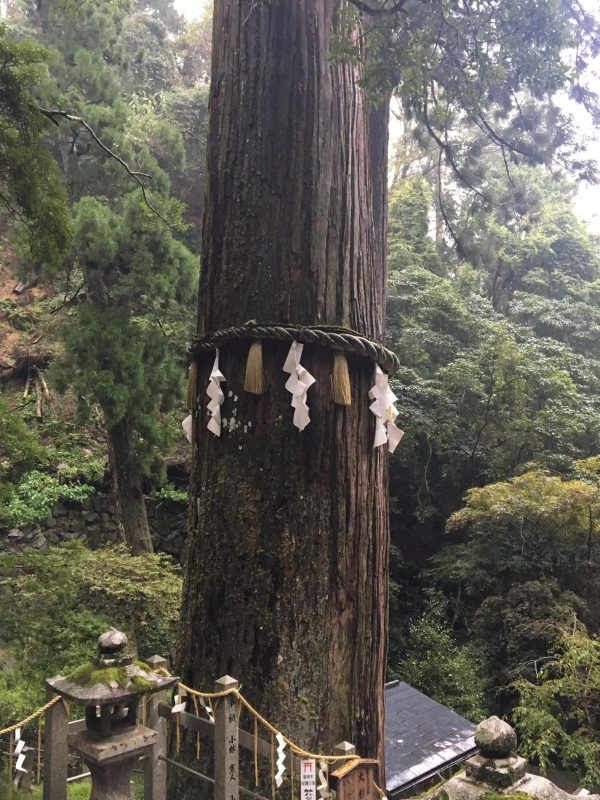 Forest Bathing training in Japan