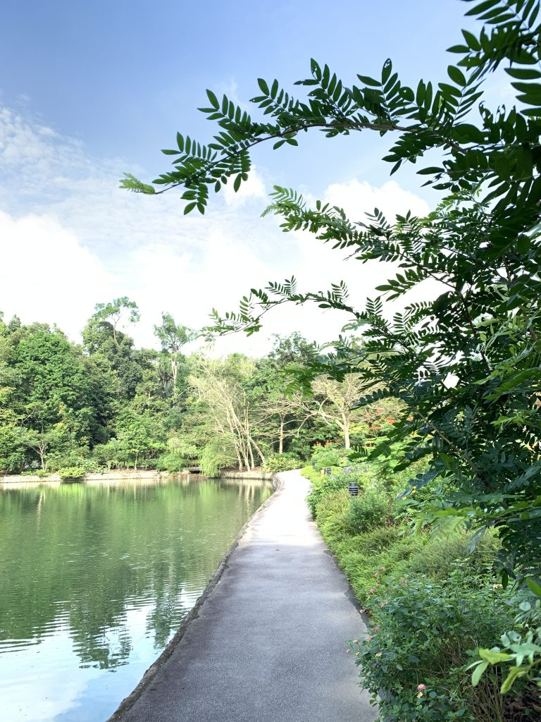 Forest Bathing in Singapore