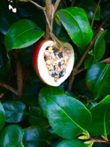 an apple a day - loving the bird feeder