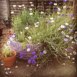 no spend gardeners gifts