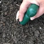 planting garlic in october outside