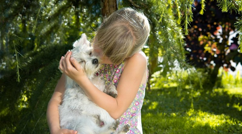 pet therapy - the minutes fly - web magazine