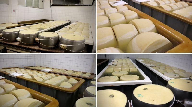 tour gastronomico - salagione delle forme - the minutes fly - formaggio