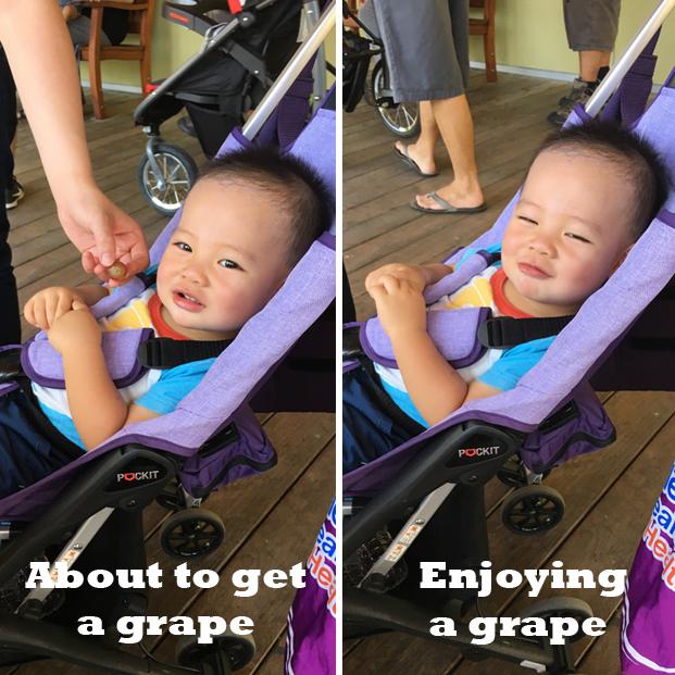 Morris and His Grapes
