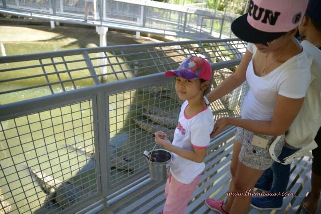 Cebu Safari and Adventure Park - Crocodile Feeding