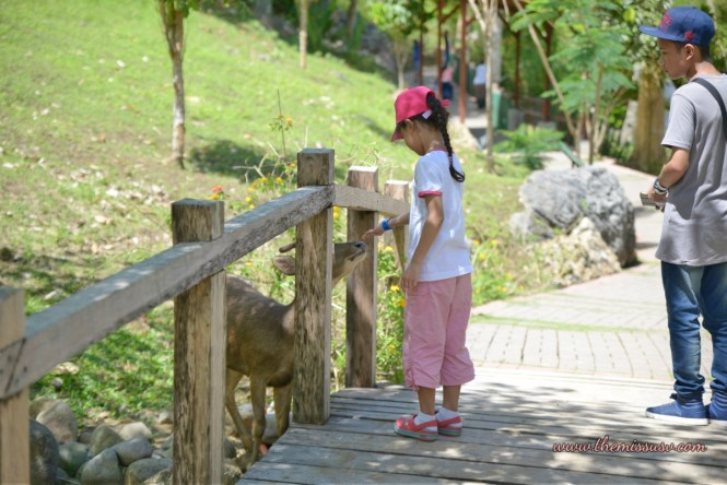 Cebu Safari and Adventure Park - Deer