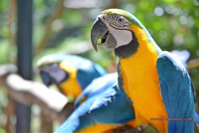 Cebu Safari and Adventure Park - Macaw Bird
