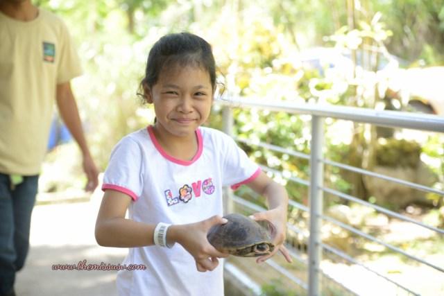Cebu Safari and Adventure Park - Turtle