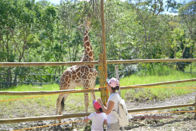 So excited to see a giraffe - Cebu Safari and Adventure Park