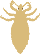 What Parents Need to Know about Head Lice