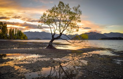 That Wanaka tree at sunset. Wanaka, South Island, New Zealand.
