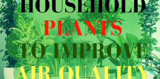 household plants