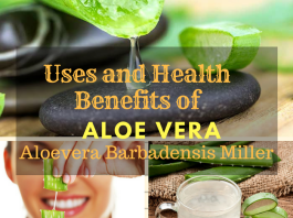 What are the Uses & Benefits of Aloe Vera (Aloe Barbadensis Miller) ?