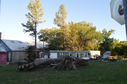 A fallen cottonwood tree sits in a city-owned lot in Lodge Grass, MT. A summer storm caused trees to fall onto a trailer.