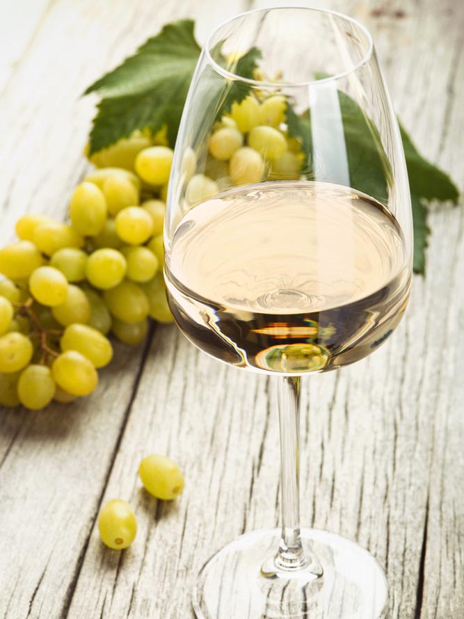 Chardonnay-Modifica.jpg