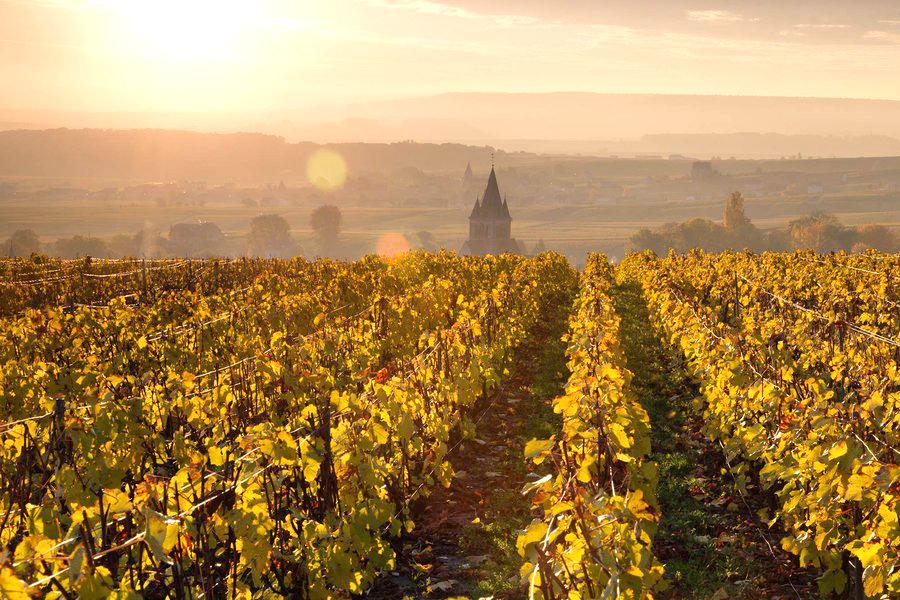 champagne-autumn-vineyards-france-CHAMPAGNE1118.jpg