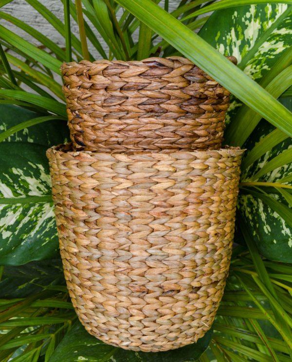 Buy planters india