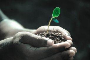 plant seed rakhi