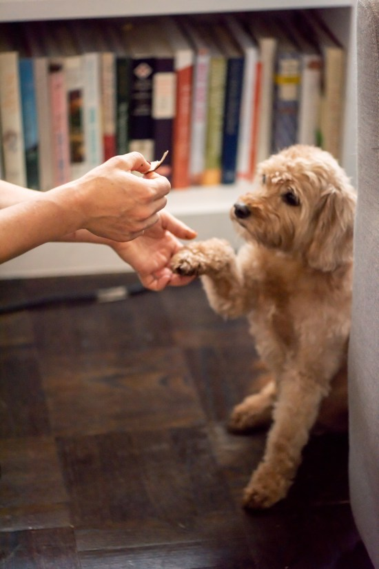 How to Give a Dog a Pill / Photo by Cheyenne Cohen / Katie Workman / themom100.com