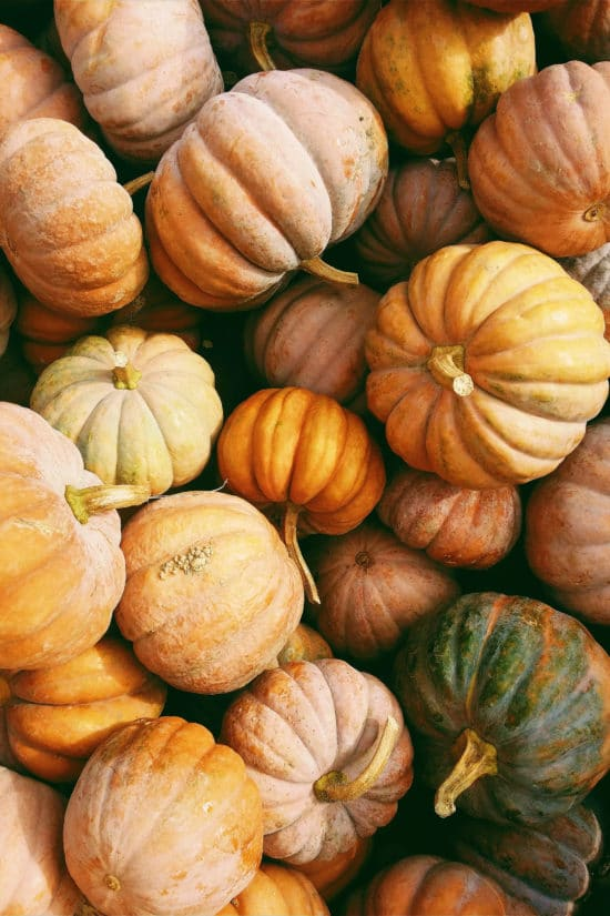 What Pumpkins Are Best for Cooking? / Photo by Kerstin Wrba / Unsplash.com