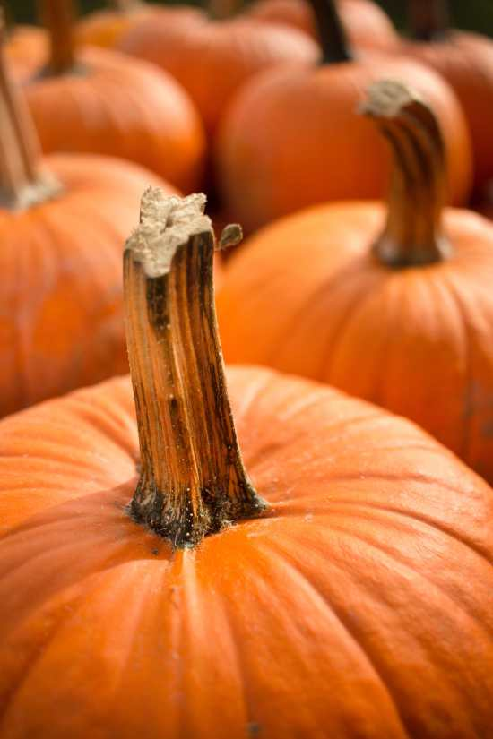 How Do I Cut Up a Pumpkin? / Photo by Madison Kaminski / Unsplash.com