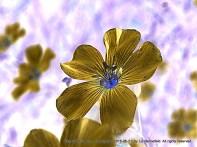 Photo - inverted color, holga filter