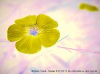 Monday Flower Art 2