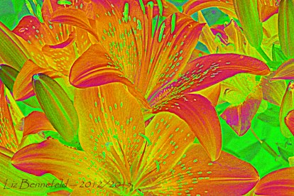 Tiger Lilies, Color Manipulated to oranges, reds and greens