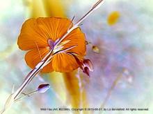 Wild Flax and Stem (Art)