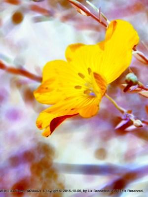 Flax Flower #24442