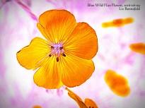 Flower Art #7641