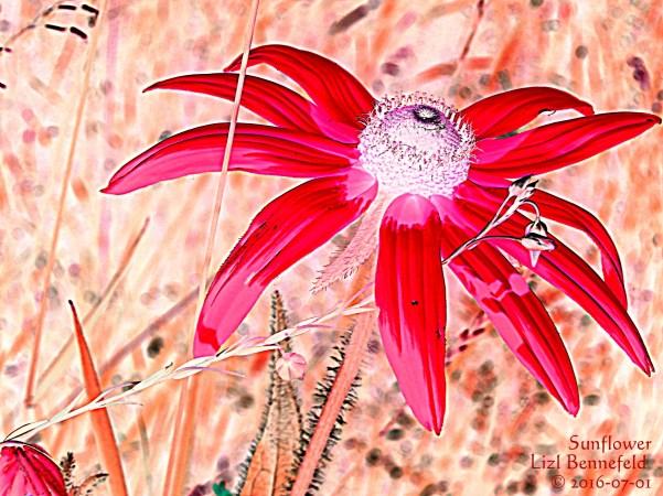 Wild Sunflower, False Colors