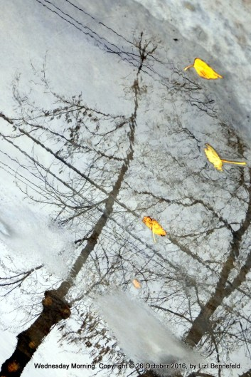 trees, leaves and power lines reflected in water puddle