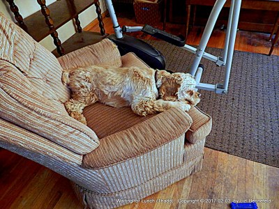 dog on chair in front of exercise bike in living room